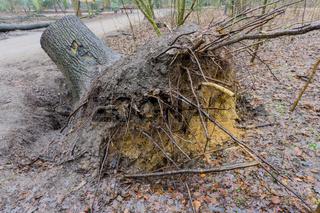 Baum umgestürzt nach einem Unwetter in Norddeutschland
