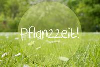 Gras Meadow, Daisy Flowers, Pflanzzeit Means Planting Season