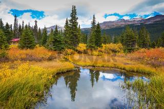 The yellow autumn grass around the Bow Lake