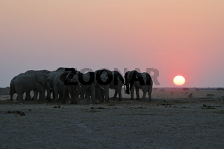 Afrikanische Elefanten (Loxodonta africana) im Sonnenuntergang am Wasserloch, Nxai Pan, Makgadikgadi-Pans-Nationalpark, Botsuana, Afrika, African Elephants (Loxodonta africana) at sunset, waterhole, Makgadikgadi Pans NP, Botswana, Africa