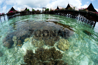 the resort with beautiful coral at foreground