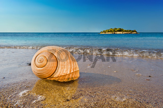 Seashell on calm Mediterranean beach