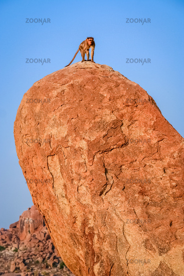 Monkey on a boulder