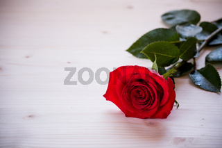 Red rose on a table