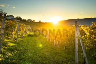 beautiful vineyard in switzerland in blue sky