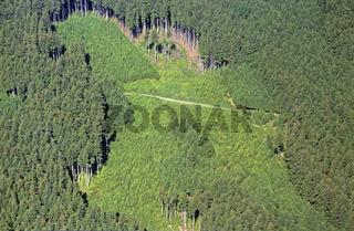 Luftbildaufnahme eines Fichtenwalds