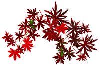Fall leaf figure1