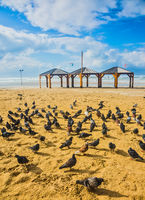 Large flock of pigeons resting on the beach