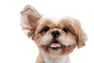 Lustiger kleiner Mischlingshund