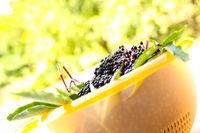 Elder Berries in a bowl