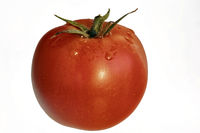 A single red ripe fresh tomato with water drops for release.