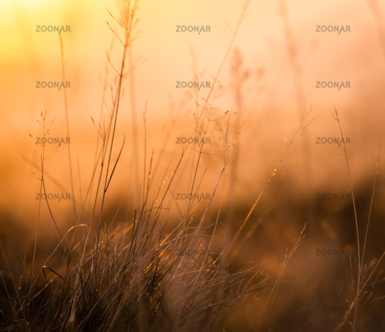 Retro Meadow Grass At Sunset