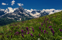 Mountains and flowers Caucasus