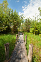 wooden road in green forest