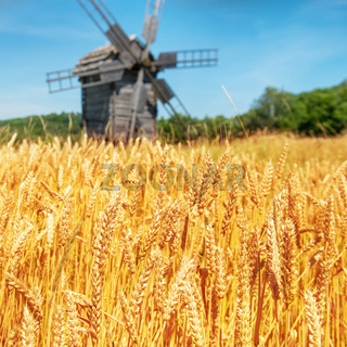 Mill on the wheat field