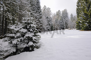 winterlich verschneite Lichtung im Wald