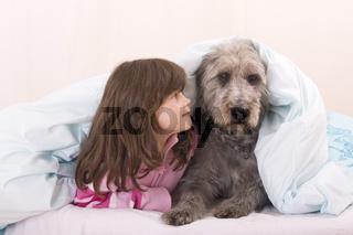 Irischer Wolfshund Mischling mit Maedchen im Bett