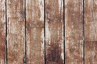 Wooden hedge closeup