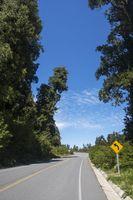 Detail von der Carretera austral in chile