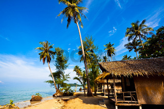 Coconut palms on tropic coast. Thailand