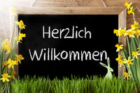 Sunny Narcissus, Easter Bunny, Chalkboard, Herzlich Willkommen Means Welcome