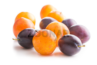 Yellow and purple plums.