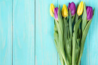 Colorful tulips on a blue wooden background