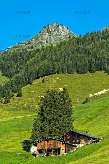 Alpine meadow, moungain farm and protection forest in the Prättigau region near St. Antönien