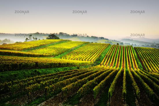 Chianti wine landscape near Lilliano, Tuscany, Italy