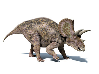 Triceratops dinosaur, isolated on white background, with clipping path..