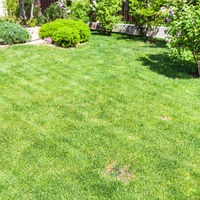 manicured lawn with decorative bushes on backyard