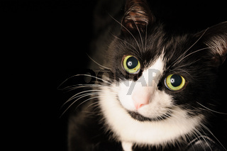 A black and white cat with a charming adorable look and green eyes is lying on a chair. The concept of pets and love of animals