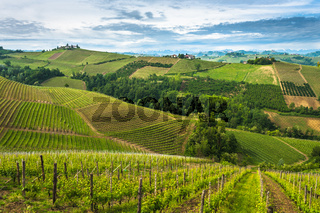 Vineyards of Langhe, Piedmont, UNESCO world heritage