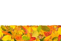 Viele verschiedene Herbstblätter