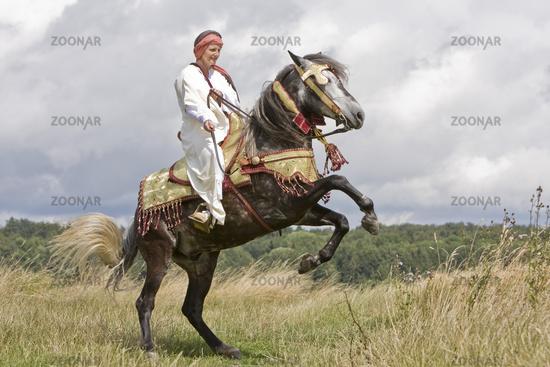 rearing barb horse