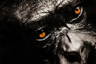 Schimpanse / Illustration