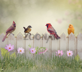 Birds on the Fence