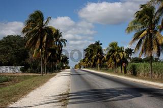 Kuba, Straße mit Palmen im Westen Kubas