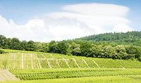 vineyards around the village of Hunawihr, Alsace, France