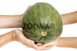 Hands of elderly farmers hold a green pumpkin