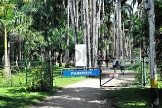 Palmentuin Paramaribo Suriname