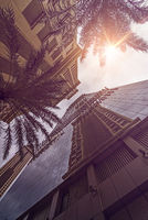 Skyskraper Palms sun