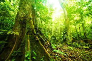 Fantastic tropical forest