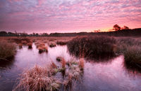 purple autumn sunrise over swamp