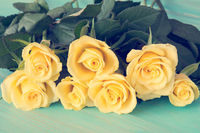 Pastel color of rose flowers