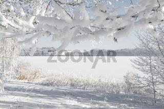Blick durch tiefverschneite Äste auf einen vereisten See im Winter.