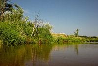 Riverbank Liwiec in summer