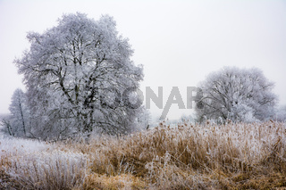 Foggy winter scenic with frosted trees