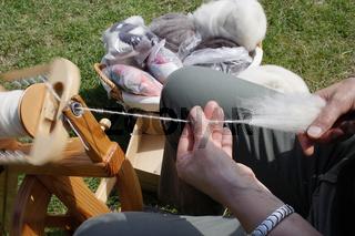 schafzuechter bei schafschur, schafwolle, schafzucht, sheep farmer is sheepshearing, sheep breeding, sheeps wool