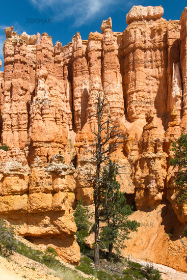 Bryce Canyon 46